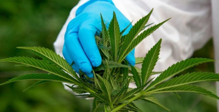South Africa's First Cannabis Testing Laboratory at Afriplex